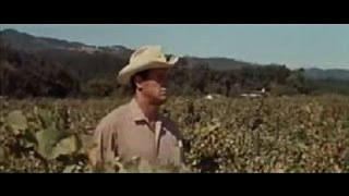 "Rock Hudson - "" This Earth is Mine ""  Opening Scenes & Credits - 1959"