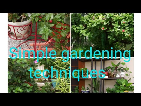 Simple gardening techniques for all people // Amazing gardening tips