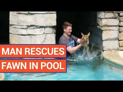Incredible Man Rescues Fawn In Pool Pet Rescue Video 2016 | Daily Heart Beat