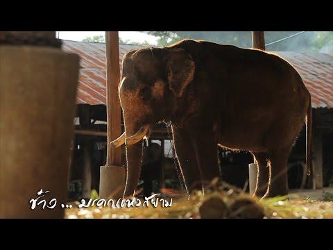 สารคดี ช้างมรดกแห่งสยาม  ออกอากาศทาง NBT