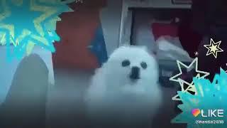 Милая собака поет песню ивангая