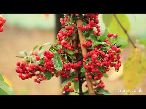 Berries For Birds