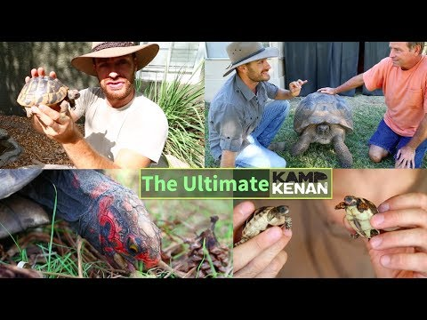 The All-time Turtle and Tortoise Tutorial and How To Videos of Kamp Kenan