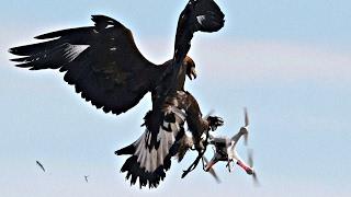 Орлы защитят небо Франции от дронов-нарушителей (новости)