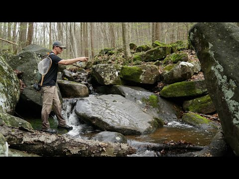 Fishing A SMALL Stream For NATIVE Brook Trout (Loaded With Fish)