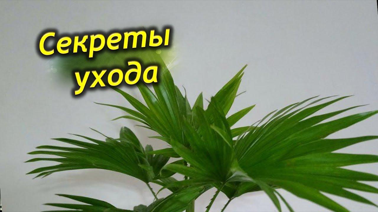 Секреты ухода за комнатными растениями.