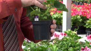Selecting Healthy Garden Plants for Your Yard - Michigan Dept of Agriculture & Rural Development