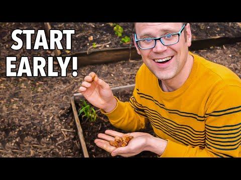 5 Vegetables to Start Before Spring