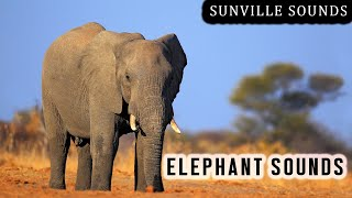 10 Hours of Elephant Sounds