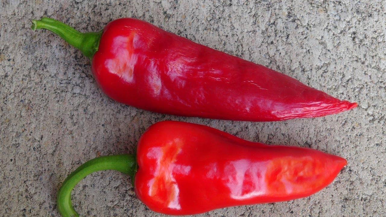 ⟹ Tatlı Boynuz Biber (Sweet Horn Pepper) | Capsicum annuum | Pod Review - YouTube
