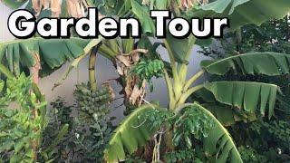 One Arizona Garden   Garden Tour  6.7.2017