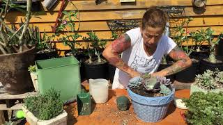 Video Create a Beautiful Succulent Arrangement download MP3, 3GP, MP4, WEBM, AVI, FLV Juni 2018