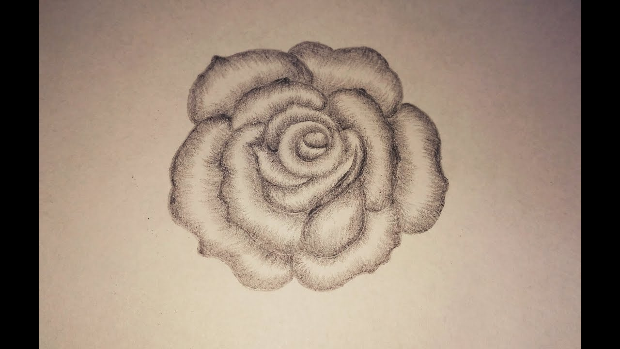 Pencil Shading For Beginners How To Draw A Rose Shading Flower How To Shade A Rose Pencils