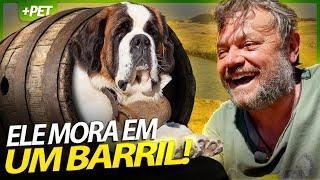 ESSES SÃO BERNARDOS VIVEM EM BARRIS! | EP.2 | INSTRUÇÕES E MANEJO
