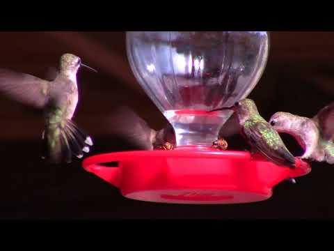 Dripping Springs Visitor Center Hummingbirds
