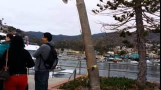 Catalina Express Line Tree Cut Down