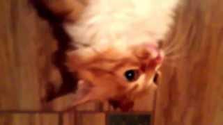 Как себя ведут ненормальные коты             1 Выпуск