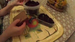 Выращивание рассады в кокосовом субстрате!