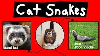 Cat Snakes, Noodle Bears, & Bandit Bois - Internet Names for Ferrets