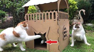 Princess Cat Defending Her Fortress!