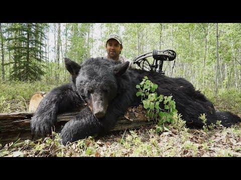 "Alberta Black Bear Bow Hunting | Pure Hunting S.5, Ep.509,  ""ALBERTA BEAR"""