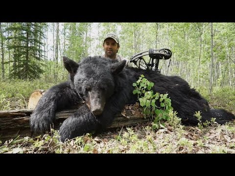 Alberta Black Bear Bow Hunting | Pure Hunting S.5, Ep.509,