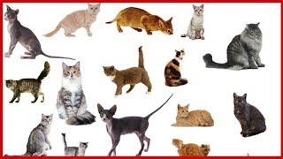 ВЛОГ 🐱 Самые редкие породы кошек в Мире Федерация кошек