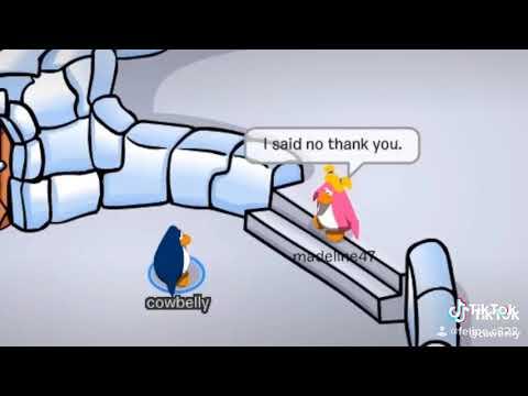 Cub Penguin Funny Fails