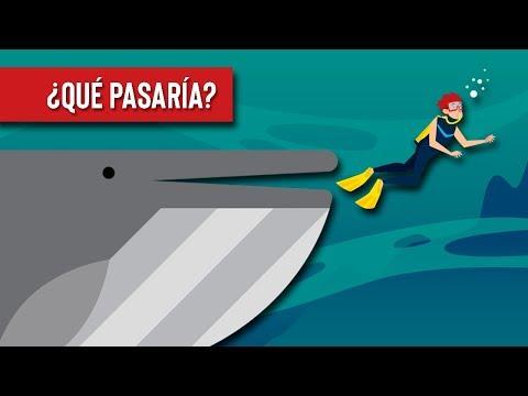 Que pasaria si una ballena te traga?