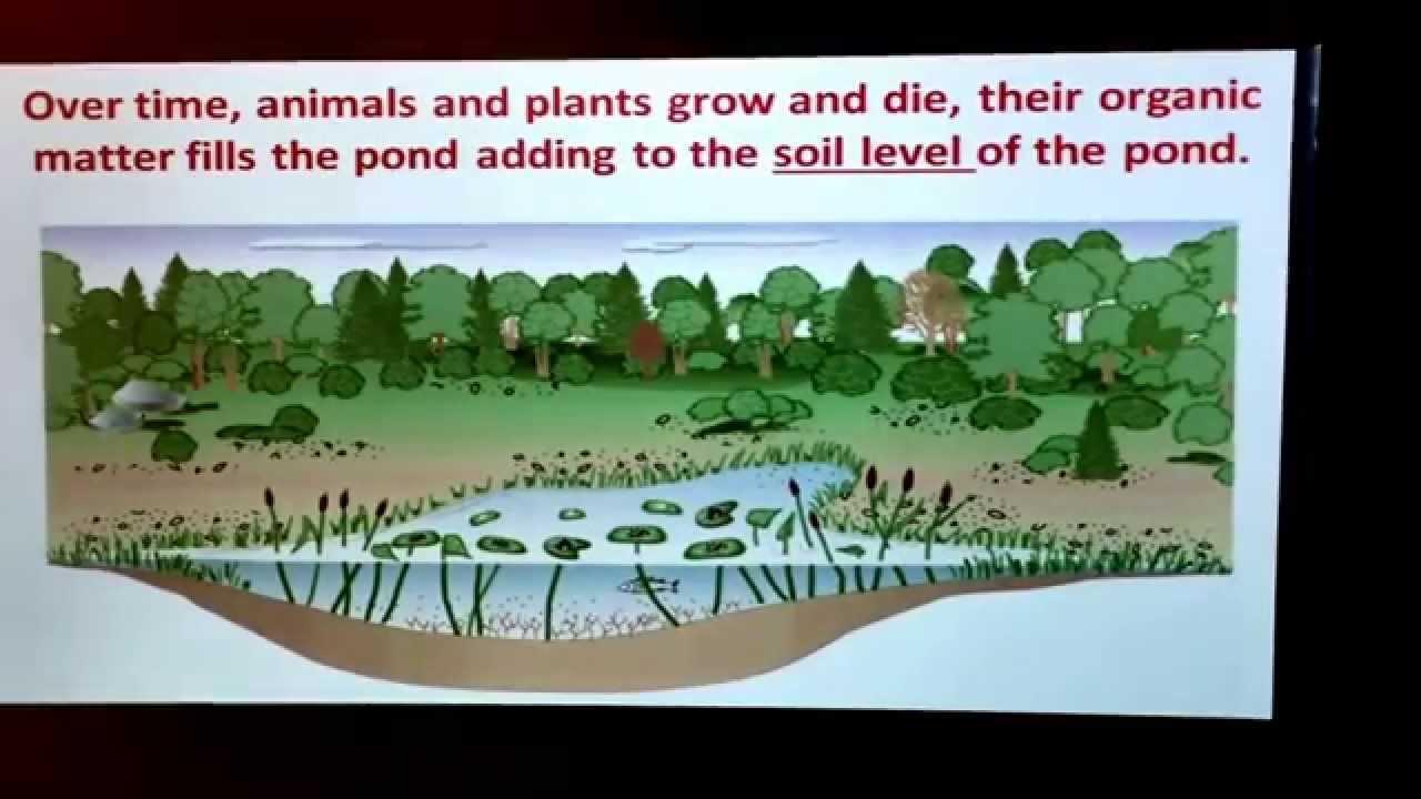 Pond Succession Individual Lesson