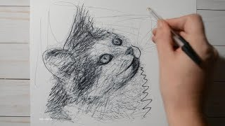 Scribble Art #76 / Draw Your Pets / Cat Looking Up / Ballpoint Pen Drawing