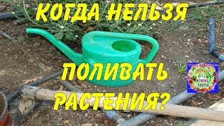 Когда нельзя поливать растения?