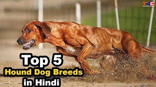 Top 5 Hound Dog Breeds You Didn't Know About : TUC