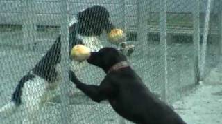 Environmental Enrichment - Service Dogs At Fjellanger Dog Training Academy