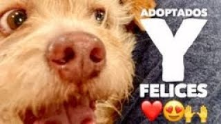 Cuando ellos son adoptados y felices! Por que tu lo pediste! Actualización últimas adopciones ❤️