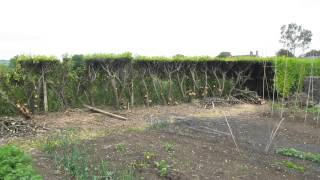 #3. The laurel hedge removal has begun