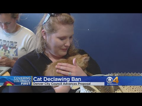 City Council Pushes Declawing Ban Proposal Forward