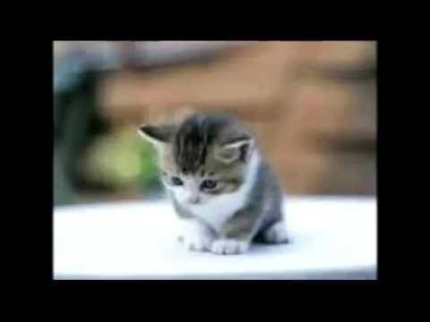 Photo de chaton trop mignon youtube - Photo chatons trop mignon ...