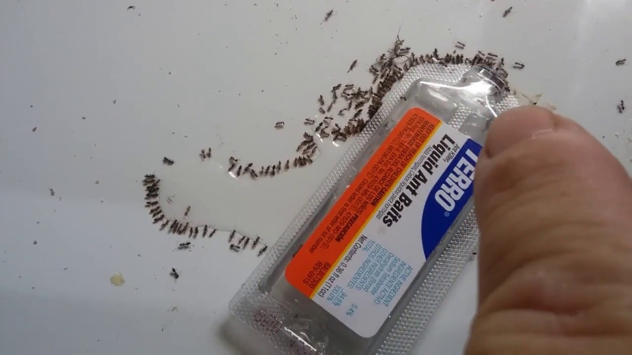 How To Get Rid Of Ants In Your Home Terro Ant Bait Review Youtube