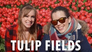 Tulip Fields Bicycle Tour Amsterdam
