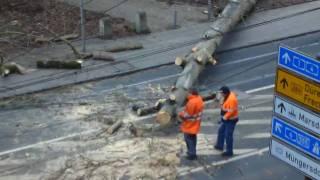 Schadenbeseitigung nach Sturm - Gewitter in Köln