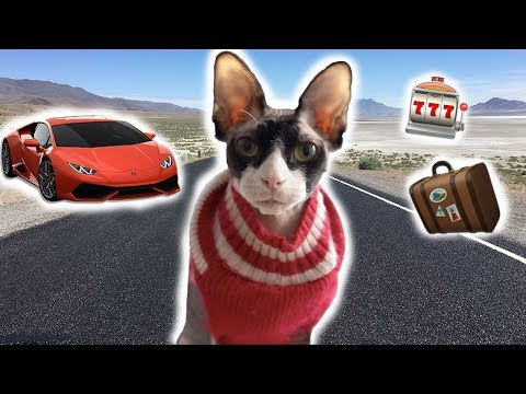 Cat Travel Bag for Road trip | The Dark Lord
