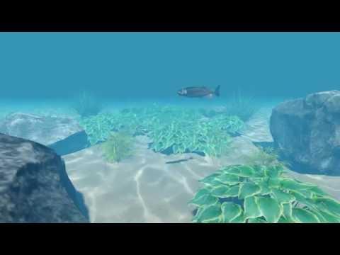 Short Underwater Scene
