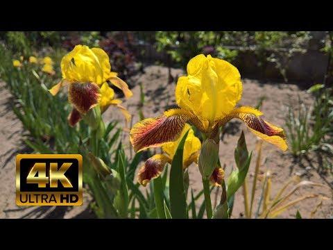 Schöne Natur Video Mit Entspannungsmusik - Beautiful Nature Video in 4K Ultra HD ・ Best Relax Music