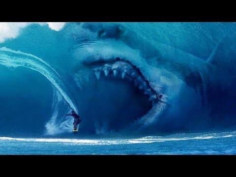 Megalodon Shark Still Alive?