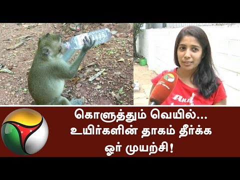 Initiative taken by a social organization in Coimbatore to quench birds and animals' thirst #Water