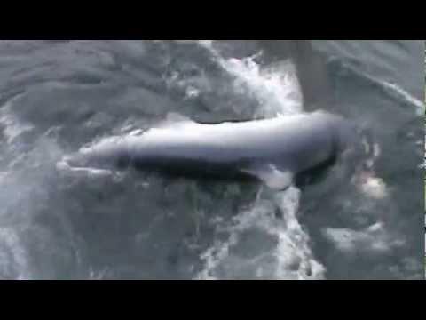 Ловля акул в Атлантическом Океане
