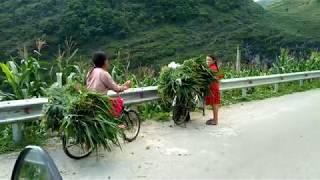 Khán Phá Cảnh Đẹp Cao Nguyên Đá Đồng Văn Hà Giang / Explore Beautiful Scenery / Giàng Mí Chứ
