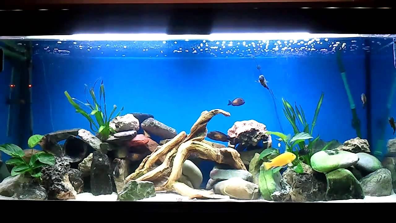 Mon premier aquarium et mes poissons youtube for Aquarium 50l
