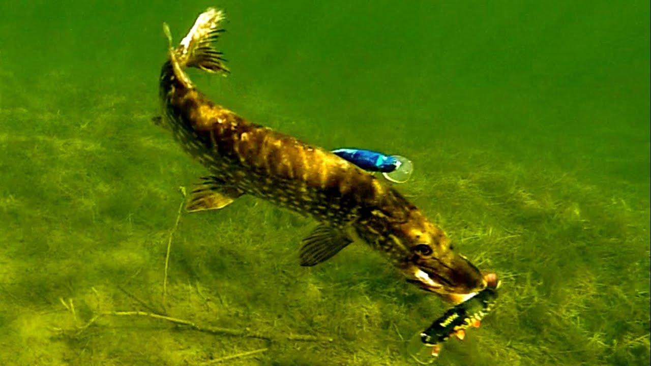 Pike Attack Mike Fishing Lure Underwater Gaddfiske Hechtangeln Pesca Del Lucio